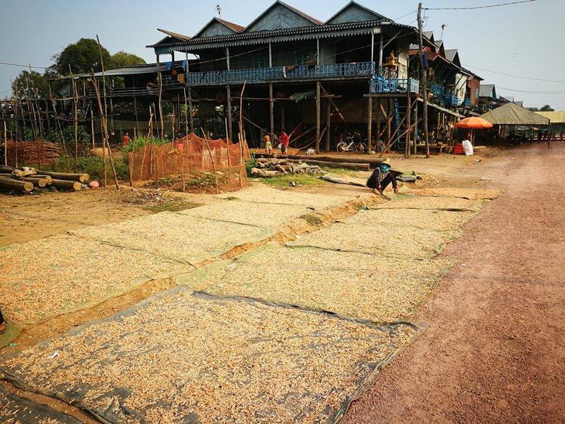 tonlesap20 Siem Reap-Tonle Sap洞里薩湖 柬埔寨的魚米鄉 落後環境中的知足生活