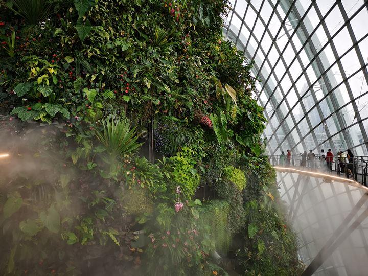 gardens-by-the-bay50 Singapore-Gardens by the Bay之Flower Dome/Cloud Forest新加坡的巨大溫室...盛夏最好的去處