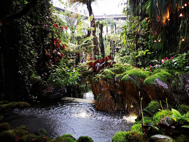 gardens-by-the-bay58 Singapore-Gardens by the Bay之Flower Dome/Cloud Forest新加坡的巨大溫室...盛夏最好的去處