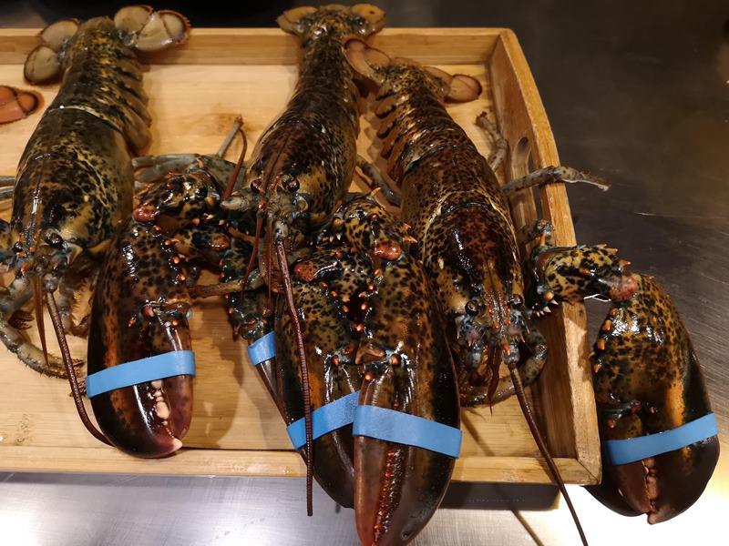santei07 中壢-三鐵鐵板燒 中原隱藏版需預約鐵板燒 食材新鮮好吃