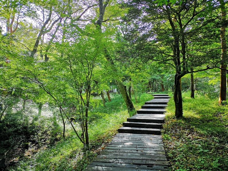 polamuseum31 Hakone-箱根Pola Museum of Art森林中的綠寶石 自然與人文兼具的美術館