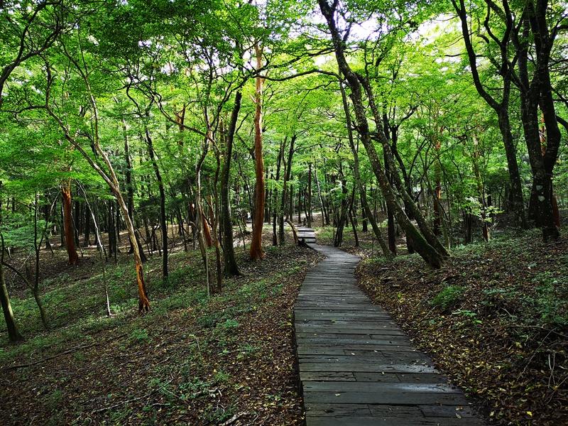 polamuseum35 Hakone-箱根Pola Museum of Art森林中的綠寶石 自然與人文兼具的美術館