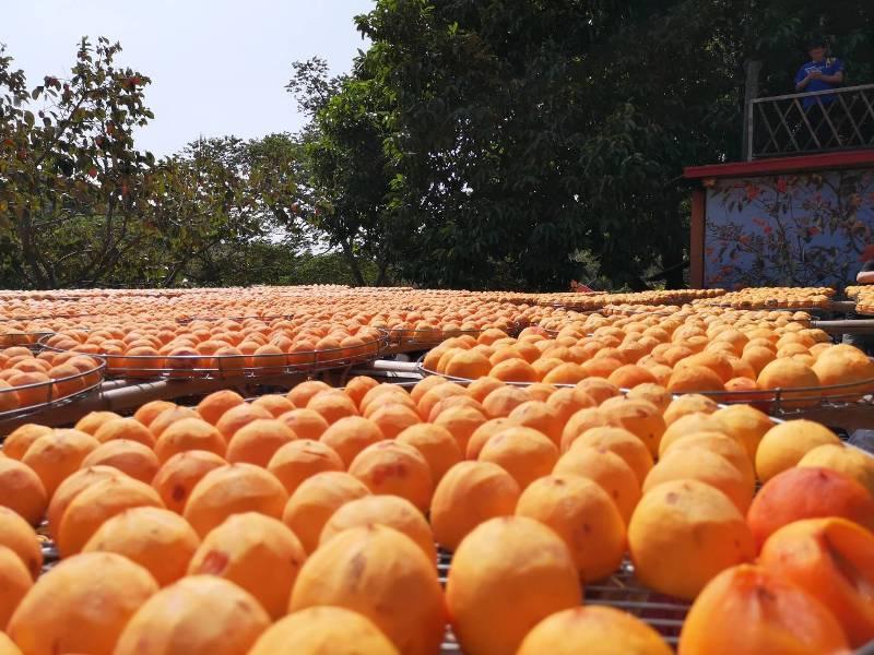 xinpu0122 新埔-味衛佳 北台灣秋天美麗的風景 好吃好玩好好拍的柿餅