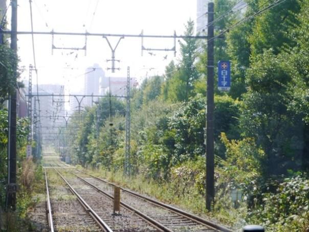 Arakawa15 Tokyo-都電荒川線散策之古老電車懷舊市區