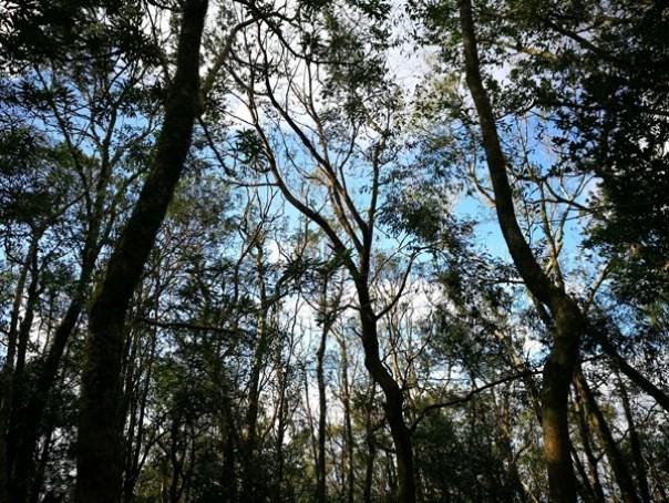 dongyen16 復興-東眼山 藍天白雲青山綠樹...景色壯觀視野開闊...還有美麗的彩虹
