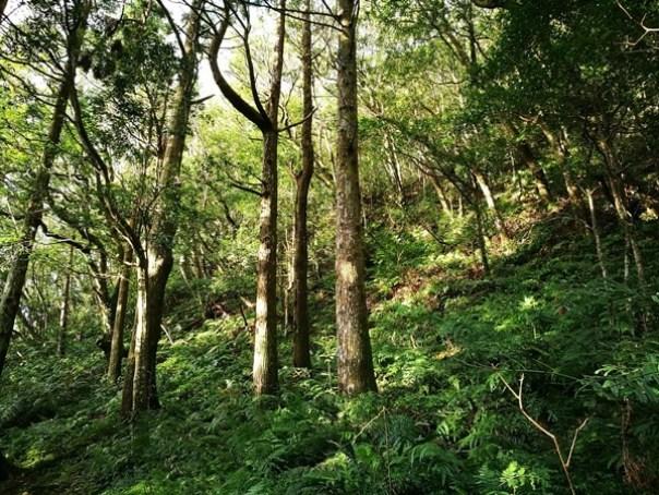 dongyen22 復興-東眼山 藍天白雲青山綠樹...景色壯觀視野開闊...還有美麗的彩虹