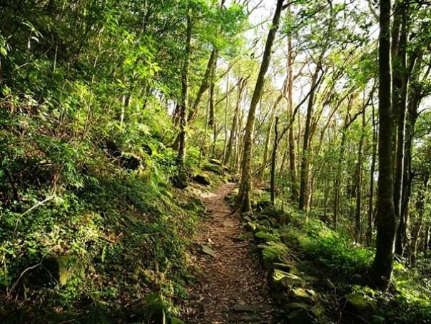 dongyen24 復興-東眼山 藍天白雲青山綠樹...景色壯觀視野開闊...還有美麗的彩虹