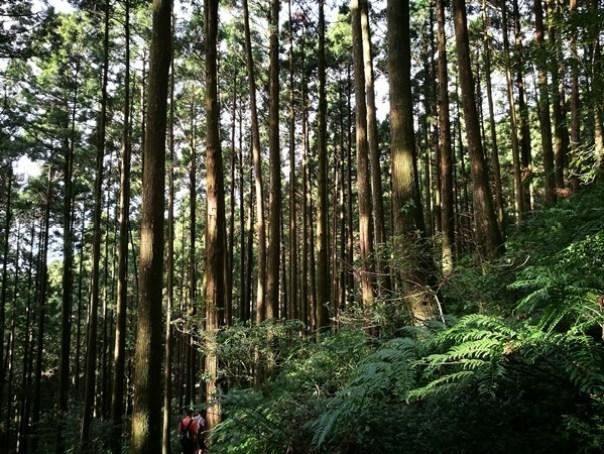 dongyen25 復興-東眼山 藍天白雲青山綠樹...景色壯觀視野開闊...還有美麗的彩虹