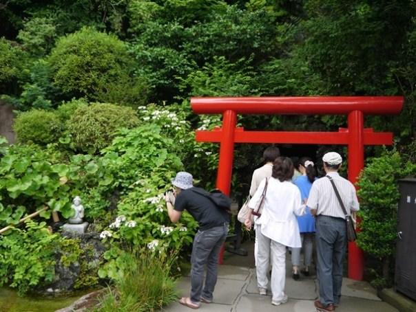 flowertemple13 Kamakura-鎌倉長谷寺 紫陽花季人山人海啊