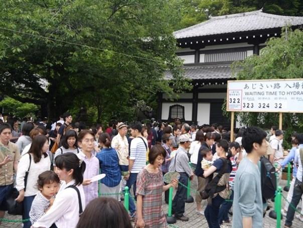 flowertemple23 Kamakura-鎌倉長谷寺 紫陽花季人山人海啊