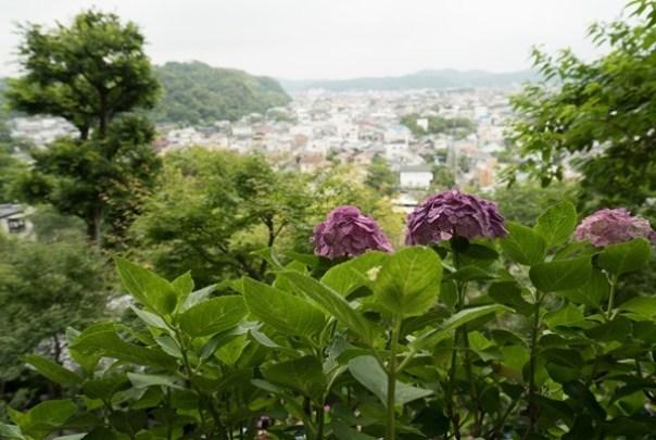 flowertemple37 Kamakura-鎌倉長谷寺 紫陽花季人山人海啊