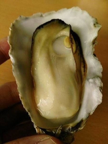 kaki14 Matsushima-たいかん亭 搭船遊松島前來一份牡蠣大餐 牡蠣也太大顆飽滿!