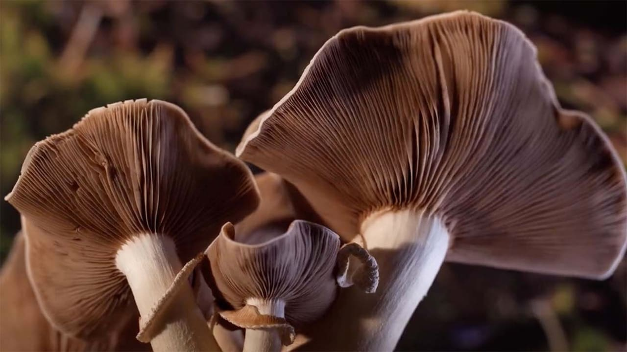 Louie schwartzberg, eugenia bone, suzanne simard, roland griffiths, jay harman,. Fantastic Fungi 2019 Full Movies Online