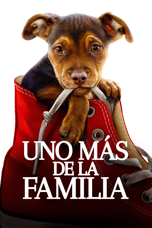 Ver Online Uno Mas De La Familia Pelicula Online A Dog S