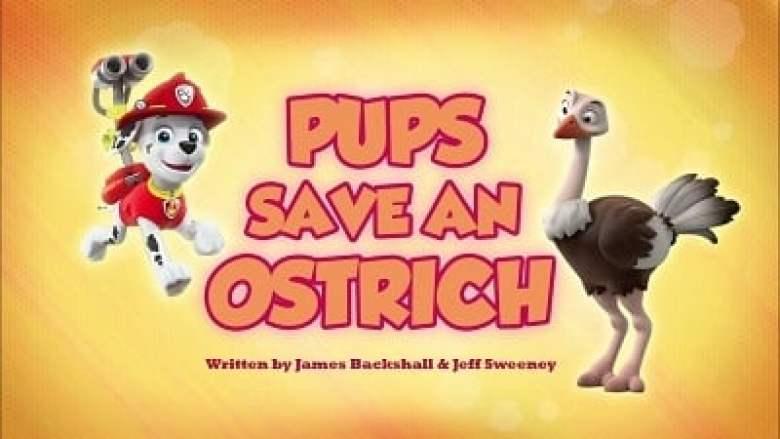 Pups Save an Ostrich