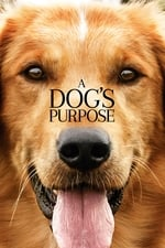 Movie A Dog's Purpose ( 2017 )