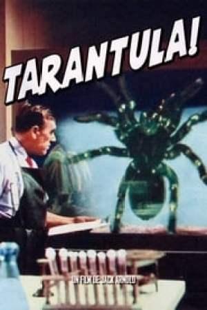 Tarantula !