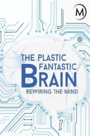 Plastic Fantastic Brain