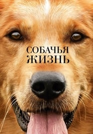 Watch Full Movie A Dog's Purpose (2017)