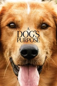 Download and Watch Movie A Dog's Purpose (2017)