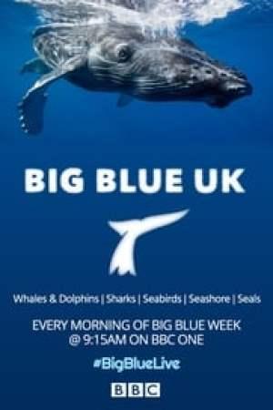 Big Blue UK