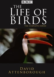 The Life of Birds streaming vf