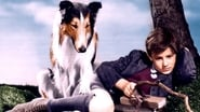 Image for movie Lassie Come Home (1943)