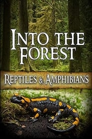 Into the Forest: Reptiles & Amphibians (2019)