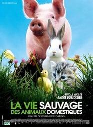 La vie sauvage des animaux domestiques Poster