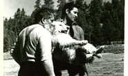 Image for movie The Night of the Grizzly (1966)
