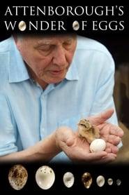 Attenborough's Wonder of Eggs streaming vf