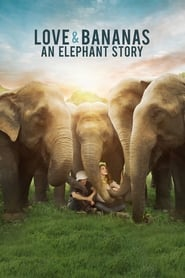 Love & Bananas: An Elephant Story streaming vf