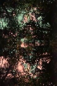 Imitation of light (2020)
