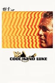Cool Hand Luke streaming vf