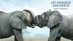 Animals In Love (2007)