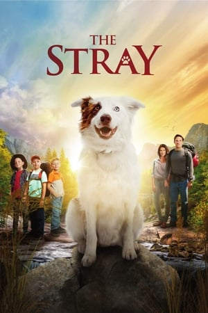 Poster Movie The Stray 2017