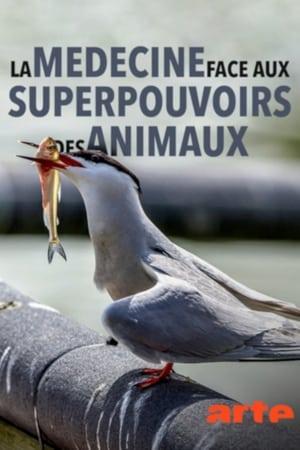 Poster Movie Wilde Medizin - Die Superkräfte der Tiere 2018