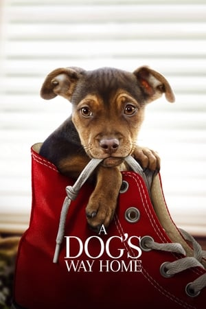 Poster Movie A Dog's Way Home 2019