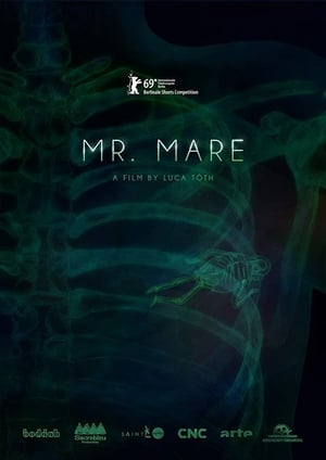 Poster Movie Mr. Mare 2019