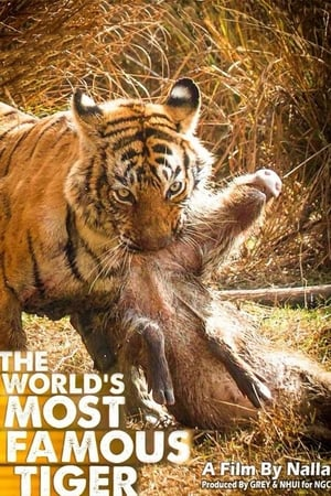 Image The World's Most Famous Tiger