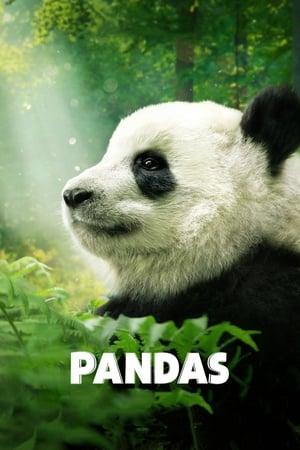 Poster Movie Pandas 2018