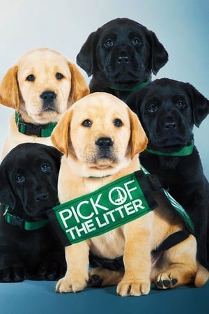 Poster Movie Pick of the Litter 2018