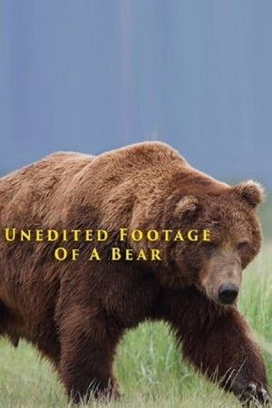 Image Unedited Footage of a Bear