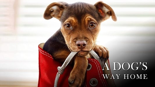 Image Movie A Dog's Way Home 2019