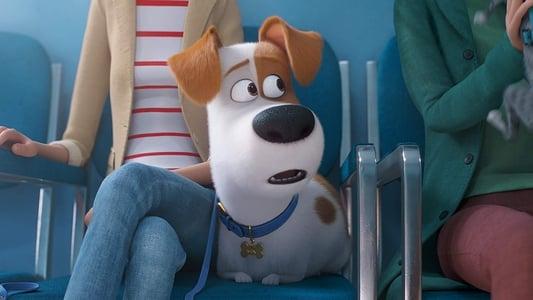 Backdrop Movie The Secret Life of Pets 2 2019