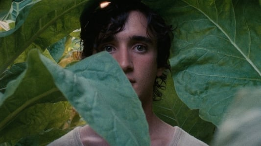 Backdrop Movie Happy as Lazzaro 2018