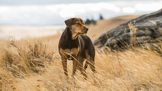 Backdrop Movie A Dog's Way Home 2019