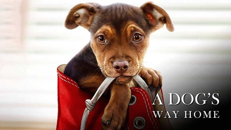 Streaming Movie A Dog's Way Home (2019)