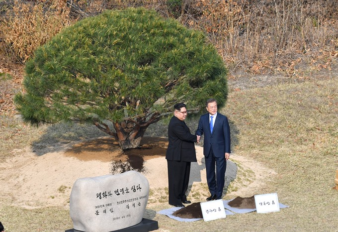 Image result for jsa pine tree planted by Moon and Kim