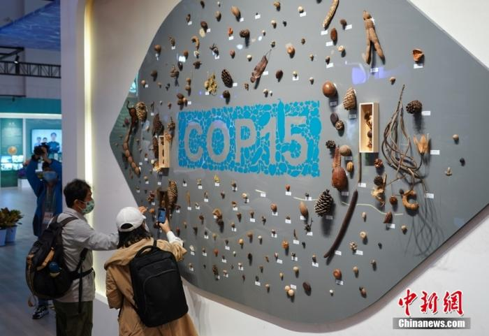 International public opinion: China takes a key step in promoting the Kunming Declaration on the ecological agenda(1)